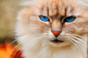 SWEET CAT by Aitor-michel
