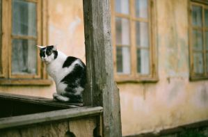 my cat by ee2606