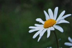 Daisy by abandonedpants