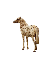 Spotted 1800's Horse-PNG by chaseandlinda