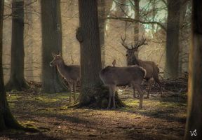 Friends of Capricornus by Capricornus60