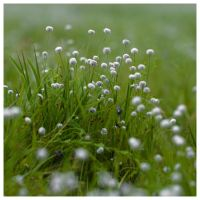 Cottonballs by AbhaySingh1