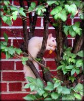Albino Squirrel by AudraMBlackburnsArt