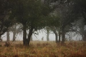 Deer in Morning Forest by xelement