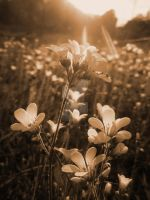 Sepia Light by Gunpowdersmoke