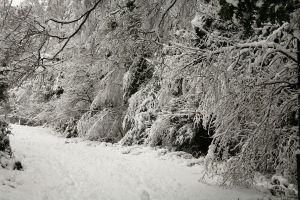 Stock : Winter Woodland Path 6 by Ange1ica-Stock
