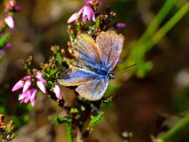 Butterfly by JoostvanD