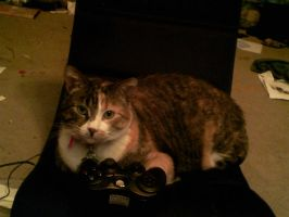 Gamer Kitty by JudgeChaos