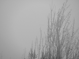 a place in the fog. by awfultosee