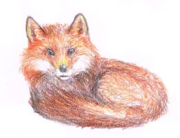 Daily Doodle (Day 23) FOXYYY!!! by Ben-Delamore