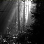 out of the dark II by indojo