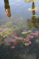 reflections of spring by justaraindrop