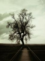 Tree of the haunted by LuisMc