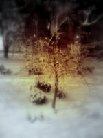 tree in the snow by entemin