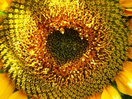 Sunflower [detail] by Clangston