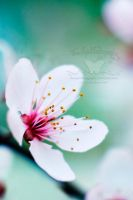 Break Into Blossom by FreeSpiritFotography