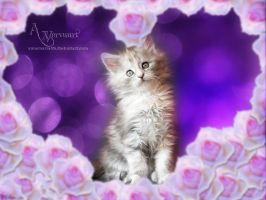 Kitten Valentine by annemaria48