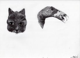 Cat and Condor by meathive