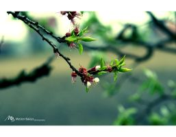 Spring 2 by Rukkancs