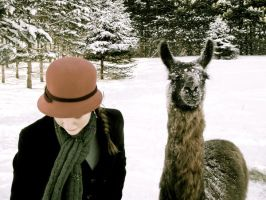 A llama and a hat by je-mange-du-te