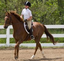 Chestnut Canter 1 by erl-stock