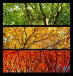 Arbres. by Zwoing