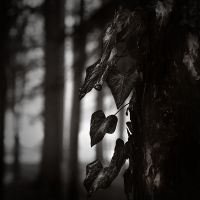 Mourning heart... by kpavlis