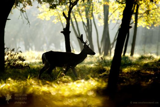Fallow Deer in a Fairy Forest by thrumyeye