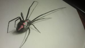 3D spider by Tolea