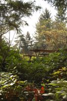 Picnic Bench through Trees by happeningstock