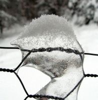 Icy Fence - close-up by JocelyneR
