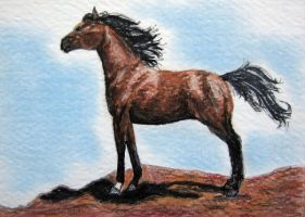 Bay Arabian ACEO by calzephyr