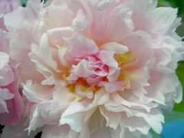 Peonies Stock 14 by Retoucher07030