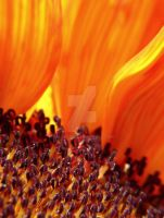 Sunflower Flames by MartaEmi