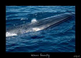 Ocean Beauty by diver420