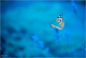 Like a butterfly by Philippe-Albanel