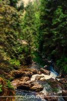 Lynn Canyon by jenniferstuber