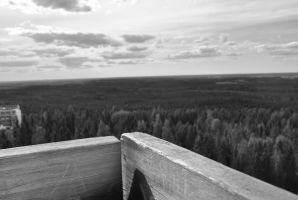 Finnish forest and the view by Morsoilija