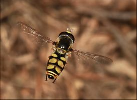 Hoverfly Hovering. by Firey-Sunset