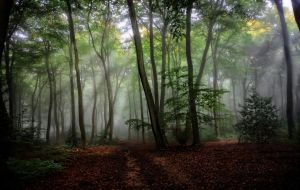 Summer misty morning Woods by CeriDJones