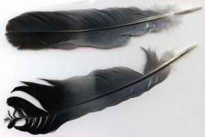 Two feathers by maladie-stock