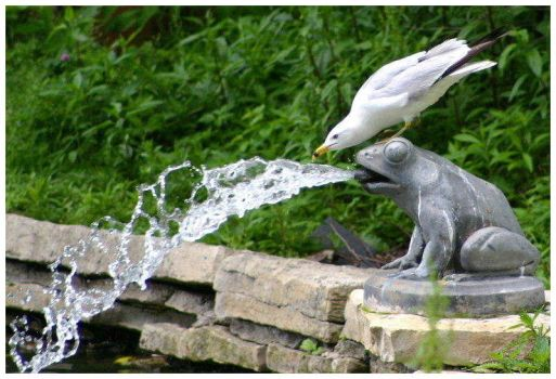 Thirsty Seagull and Frog by CTP