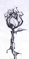 your tatoo rose by ashman