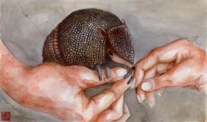 Animal: Armadillo Coloured by jinnybear