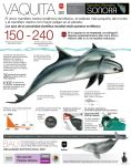 Vaquita graphic for Federal protection Agency by memuco