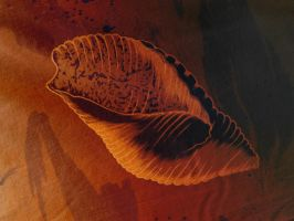 The sea shell by Voyager168