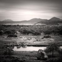 Tsavo East IV by Jez92