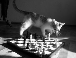 checkmate by indiswendis