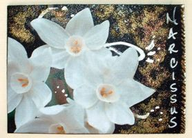 Narcissus by tisjewel
