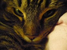 Kitty Close Up by Cecilia-Schmitt